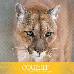 Anchor Paper - Domtar Cougar Digital Color Copy